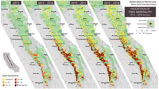 Four different maps from 2014 to 2017 side by side showing progression of tree mortality