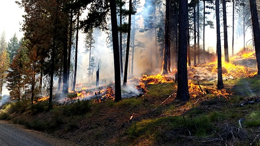 Prescribed fire burning in forest