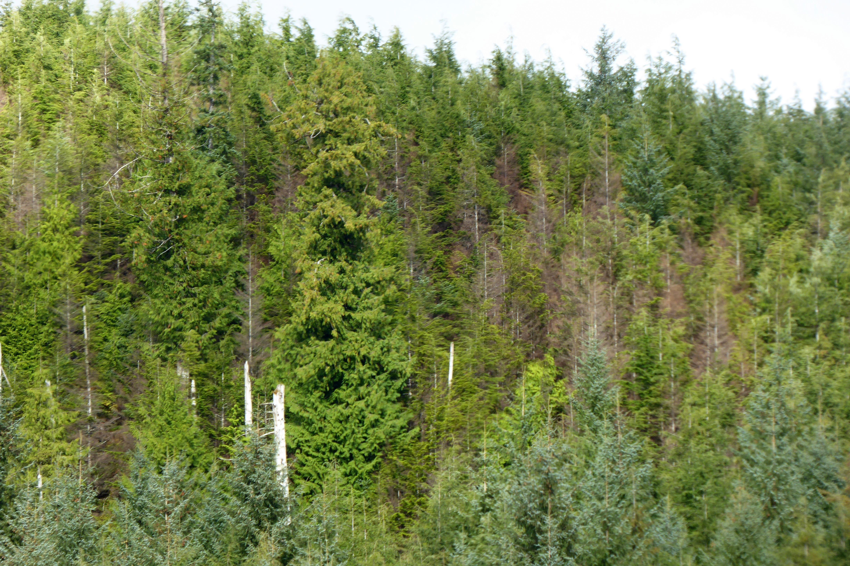 Region 10 - Forest & Grland Health on prince wales island webcam, prince of wales steelhead fishing, prince of wales map,