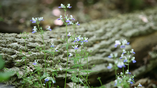 Green shoots with purple flowers emerge from beneath a thick fallen log.