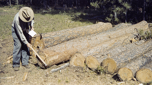 Historic Timber Photo