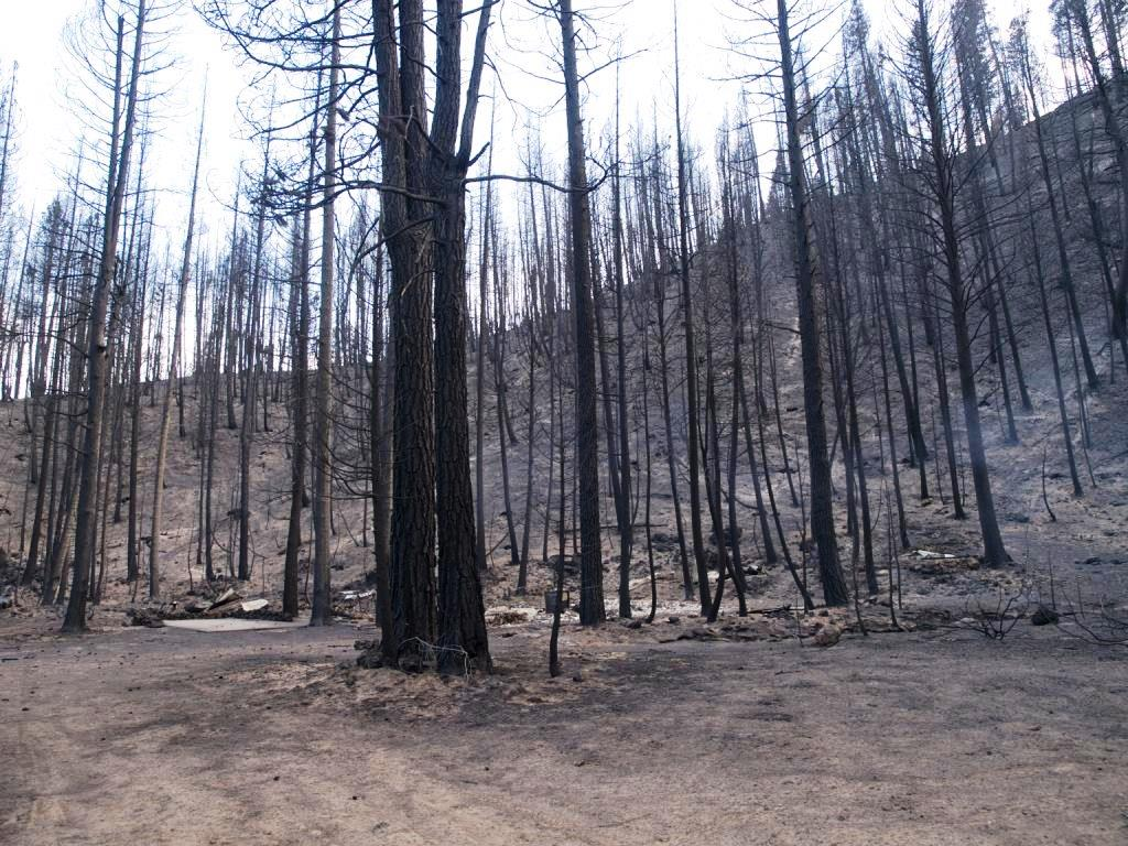 Photo of burned area void of trees