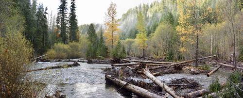 Large trees placed into Deer Creek to improve fish habitat