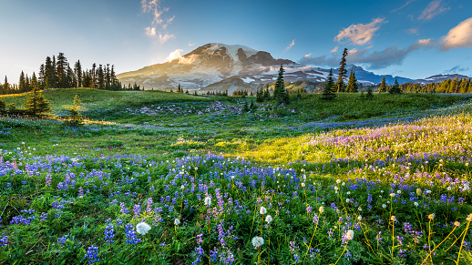 image of a field of wildflowers
