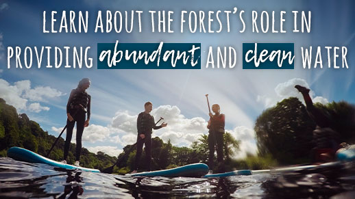 Paddle boarders on the water with text over the top promoting the impact the forests have on water.