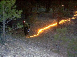 Firefighter carrying drip torch