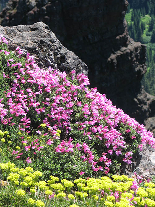 Wildflowers cover a rock face on the Iron Mountain Trail