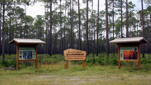 The 13,600-acre Big Gum Swamp Wilderness was designated by Congress in 1984.