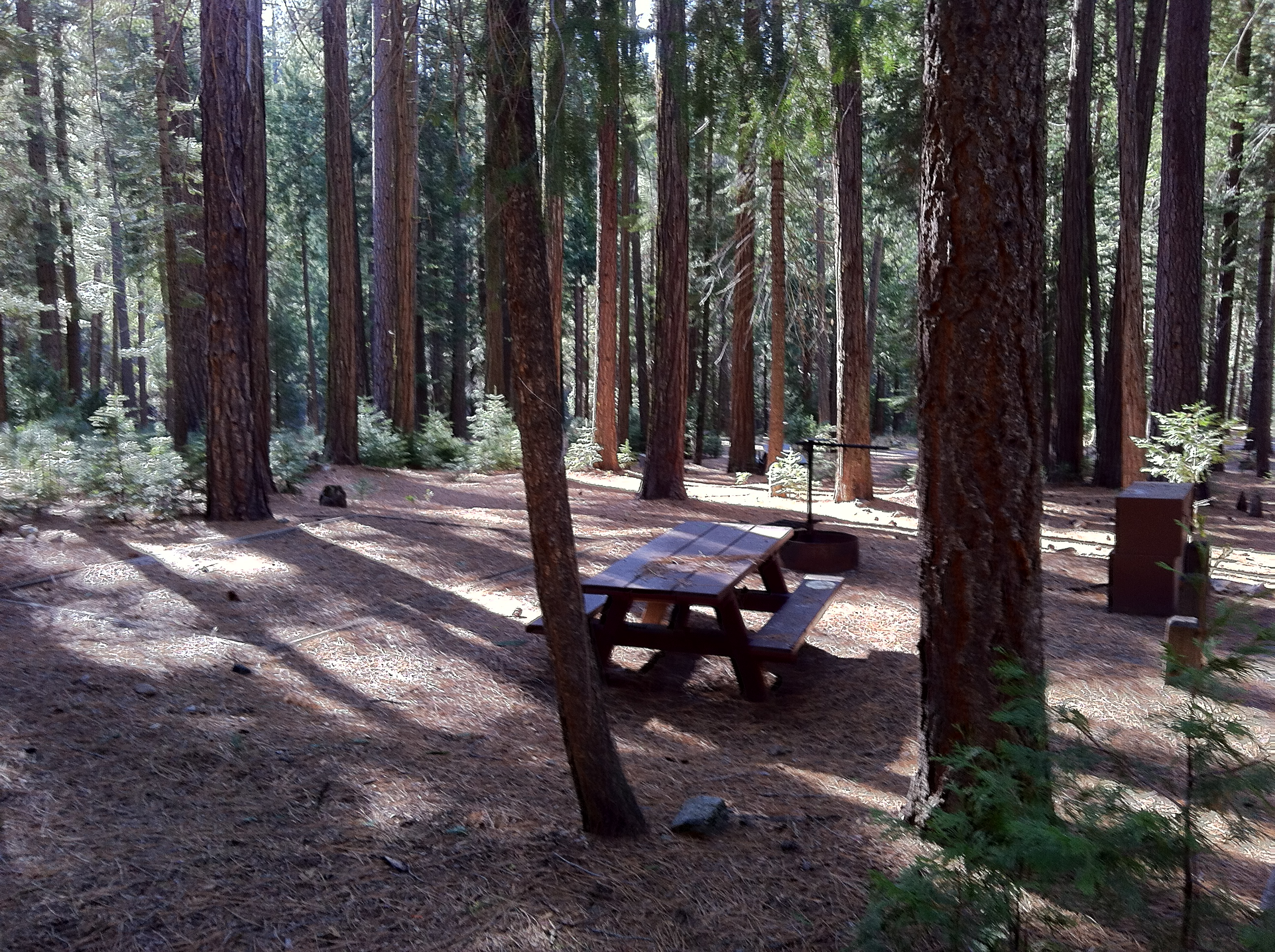Large Trees in Campgrounds