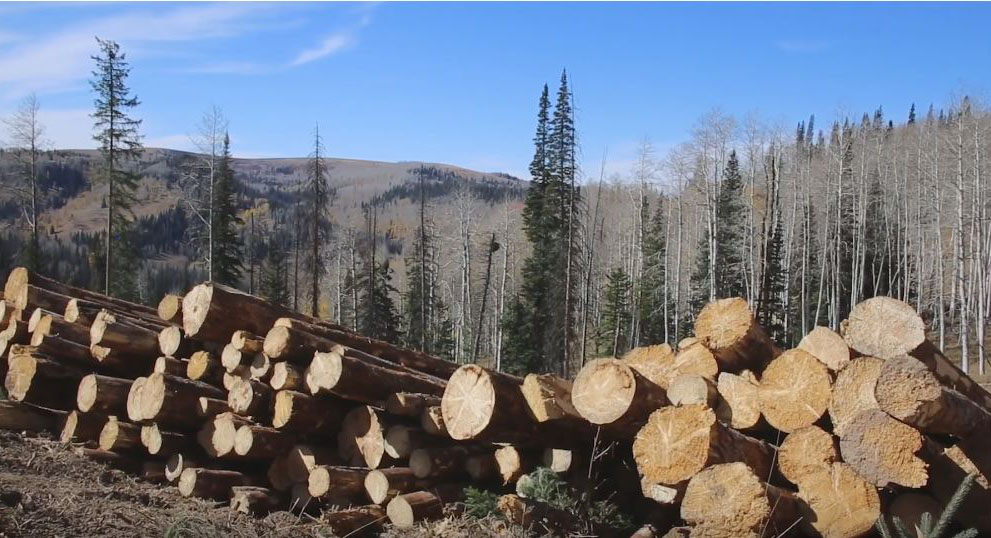Logs in foreground, mountains in background