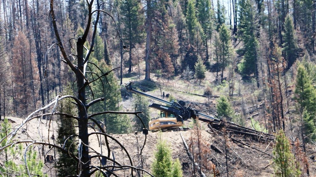 photo of logging equipment working in timber sale area