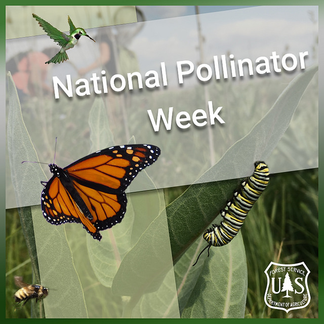 Image of some plants with a hummingbird, butterfly, bee, and a caterpillar for Pollinator Week.
