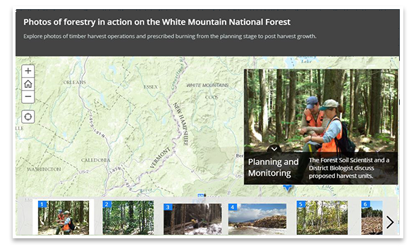 A screen shot of the Forest In ActionStoryMap