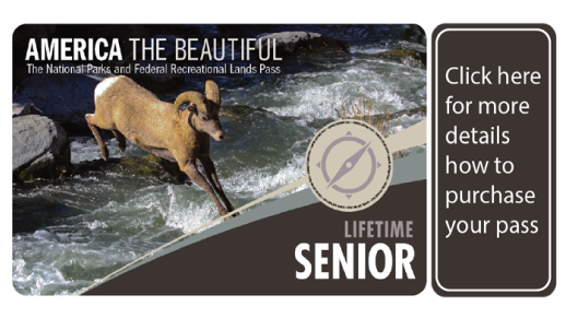 Lifetime Senior Passes - a photo of the pass cover, which has a ram on it