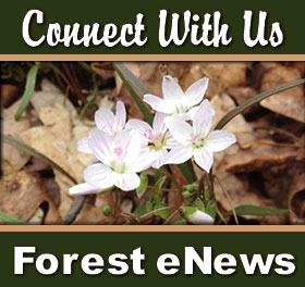 Sign up for our newsletter and don't miss any happenings on the Shawnee National Forest.