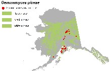 Current known distribution of Gemmamyces piceae in Alaska.