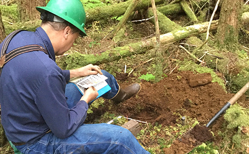 Denis Landwehr, Tongass Soil Scientist studies soil while wearing green hard hat