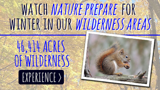 Watch nature prepare for winter in one of the Forest's 5 Congressionally designated Wilderness areas comprised of 46,414 acres!