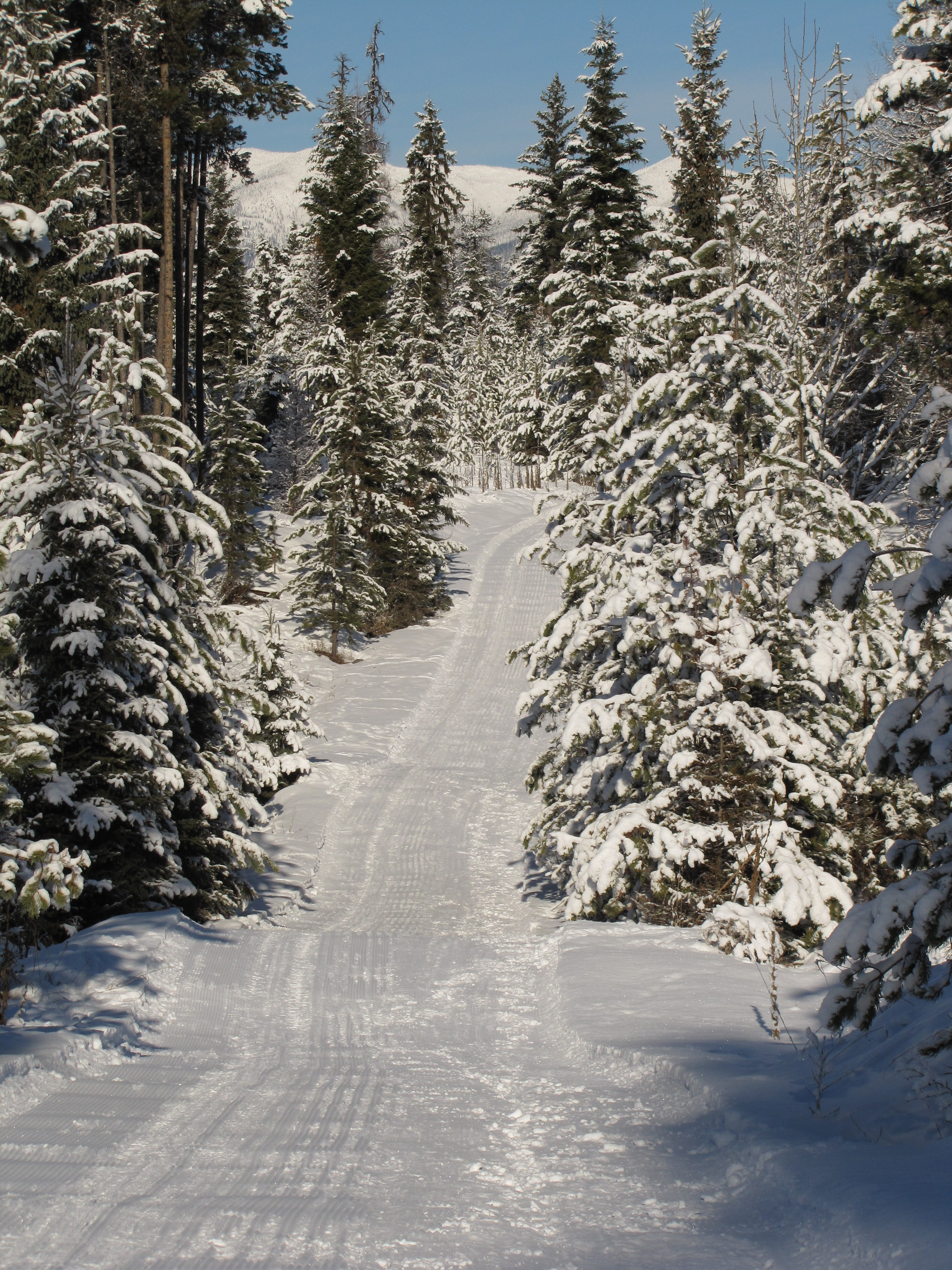 Photo of a freshly groomed trail in the Round Meadows Nordic Area.