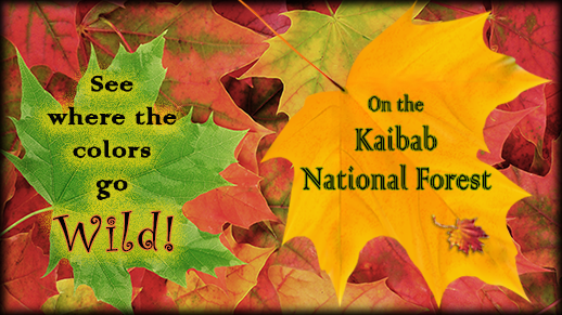 Fall colors on the Kaibab National Forest
