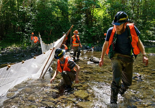 USFS Fish Biologist, Mitch Vorwerk, leads a group of interns and volunteers erecting a fish net