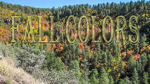 Fall colors brighten up Haywood Canyon