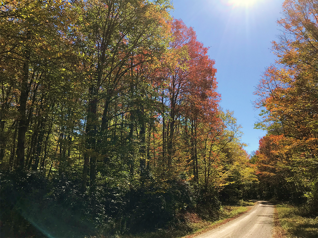 The sun shines warmly through orange and red trees that line a gravel road