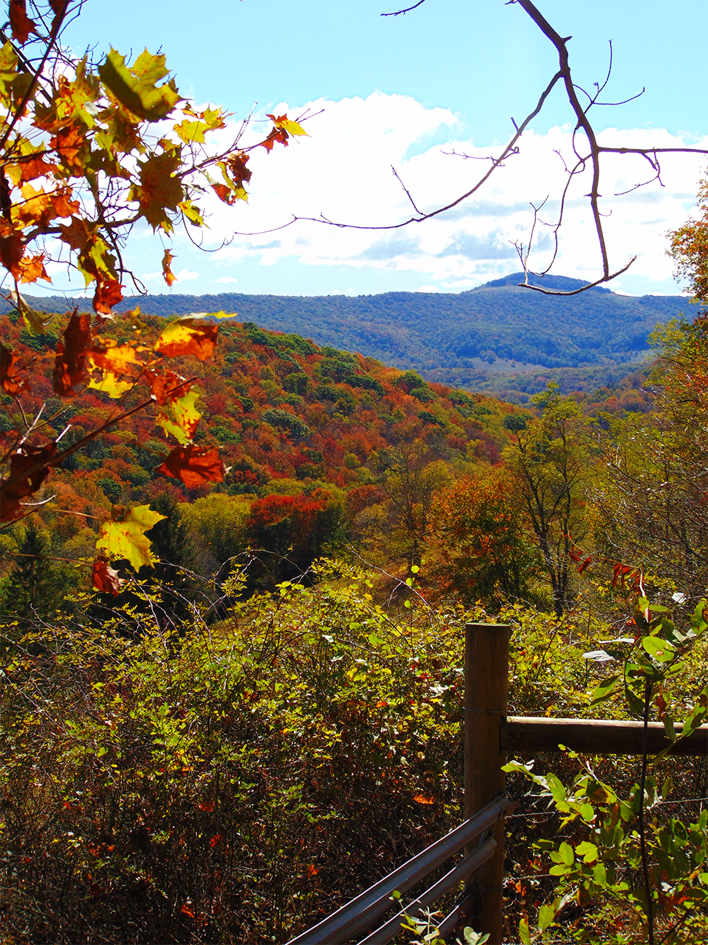 A long shot from an overlook shows that read is quickly becoming the dominant color of the forest.
