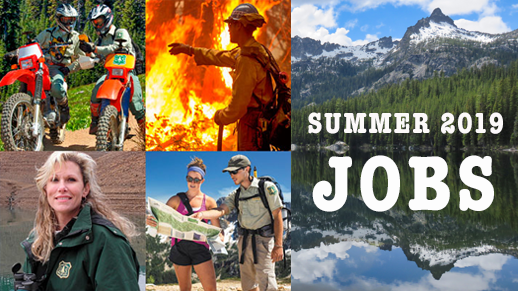 Forest Service Summer Jobs
