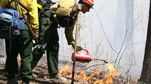 A Forest Service employee uses a device to control burn an area of vegetation.