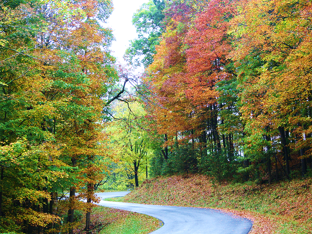 A shock of red pushes through a green and yellow canopy that lines a winding road