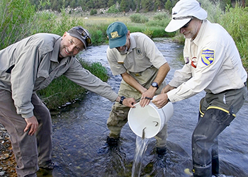 Three men stand in a mountain stream releasing fish back into the water.