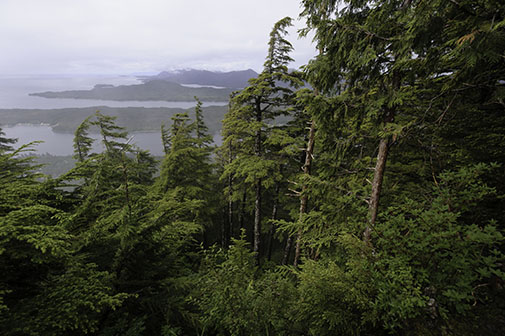 Sub Alpine trees overlooking the ocean and islands