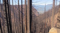 Tanner Creek Watershed was badly burned