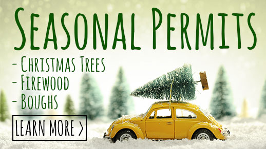 Learn more about seasonal permits for Christmas trees, boughs and firewood.