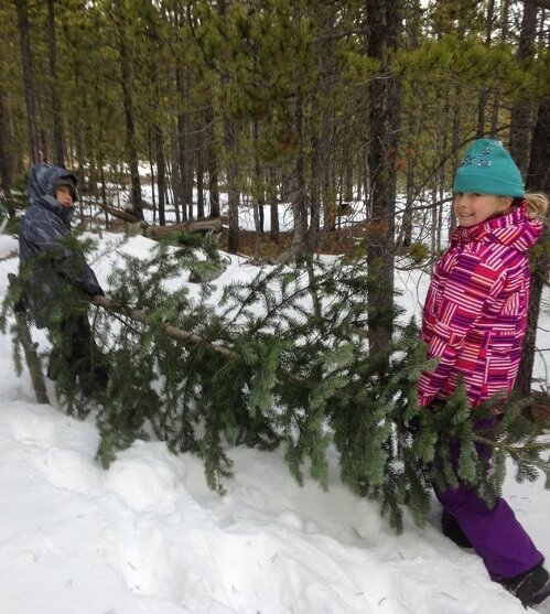 Cut Your Own Christmas Tree Near Me.Region 2 Recreation