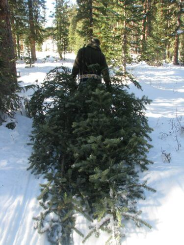 Dragging a freshly cut Christmas tree in the snow.