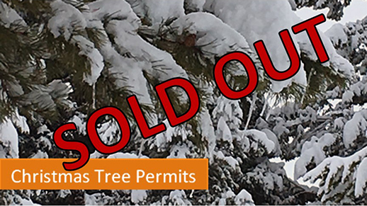Christmas Tree Permits - Sold Out