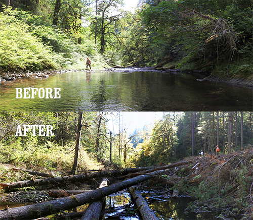 A before and after comparison of the Moose Creek stream restoration project