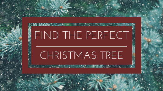 Find your perfect christmas tree
