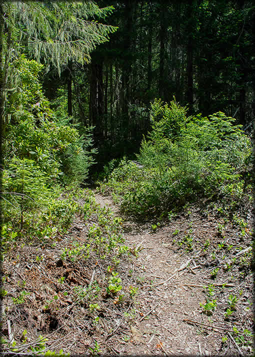 Cougar Butte Trail - Typical Trail