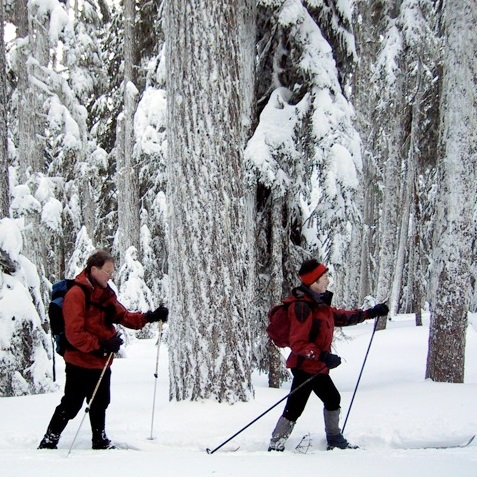 Two cross country skiers in the snow