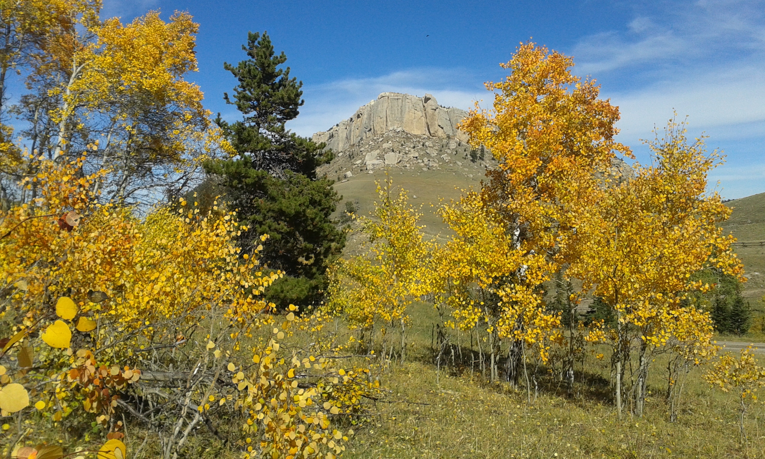 Photo of aspen trees
