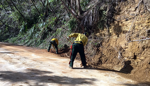 Firefighters cleaning up road