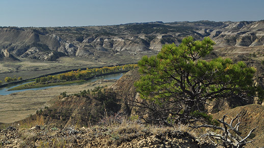 Cow Island of Upper Missouri River
