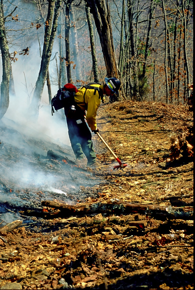 Firefighters building a fire line on a prescribed burn