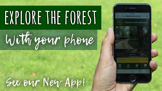 Explore the forest with your smartphone.