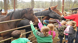 Children petting pack animals behind corral panels