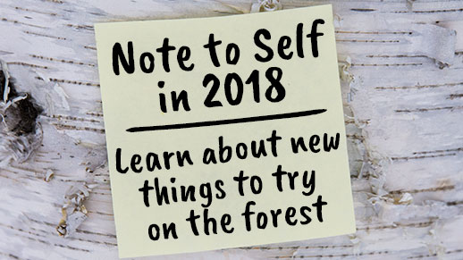 Note to self in 2018, explore the forest more.