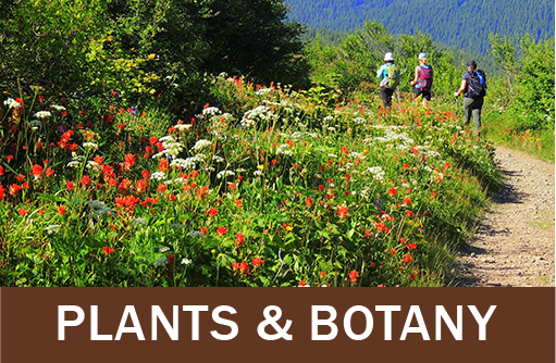 Click for botany and plants resources